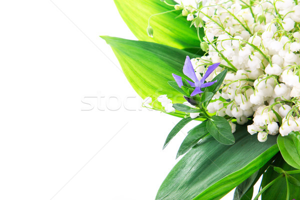 Bouquet of lilies of the valley on white background Stock photo © Len44ik