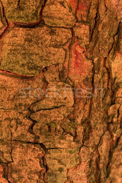 Rinde Baum Holz Textur Wald abstrakten Stock foto © Len44ik