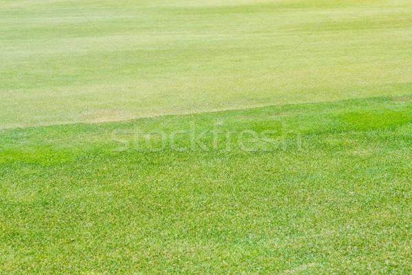 Perfeito ondulado grama golfe campo terreno Foto stock © Len44ik