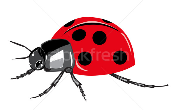 Ladybird isolated on white background. Stock photo © lenapix