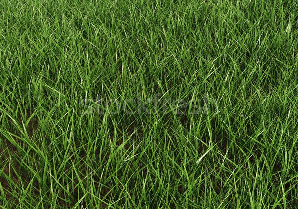 Fresche erba verde luce del sole orizzontale texture erba Foto d'archivio © lenapix