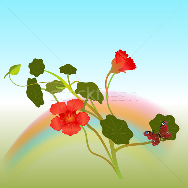 Indian cross flowers with butterfly vector illustration.  Stock photo © lenapix