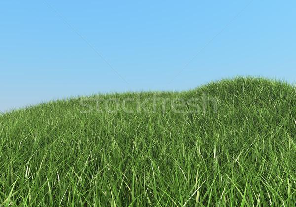 Green grass hills summer background. Stock photo © lenapix