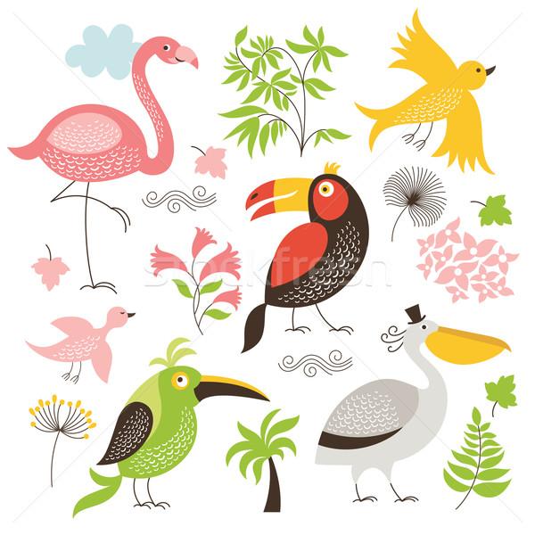 Zestaw egzotyczny ptaków komputera dzieci dziecko Zdjęcia stock © Lenlis