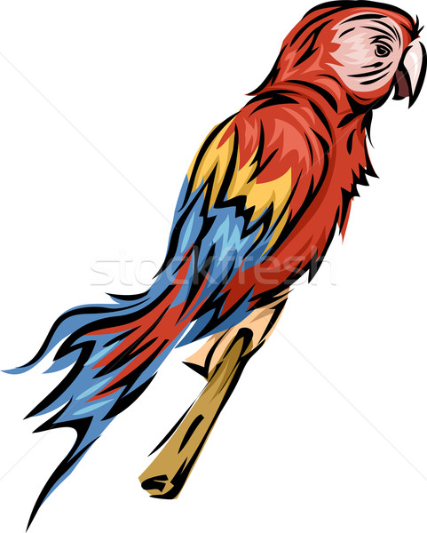 Papağan örnek karikatür grafik evcil hayvan vektör Stok fotoğraf © lenm