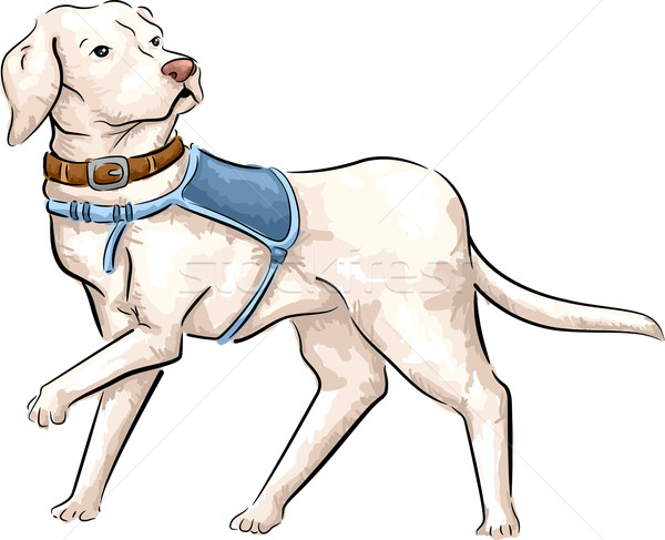 Guider chien croquis illustration cute Photo stock © lenm