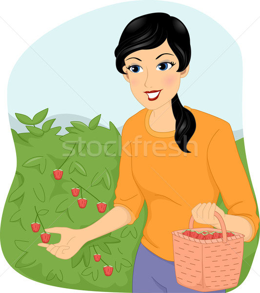Girl Berry Picking Stock photo © lenm