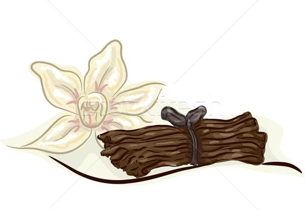 Vanilla Stock photo © lenm