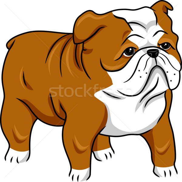 English Bulldog Stock photo © lenm