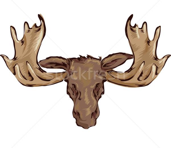 Alce cabeça ilustração recheado enforcamento parede Foto stock © lenm