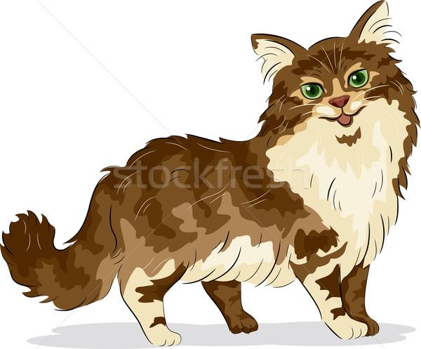 Maine macska illusztráció állat rajz Stock fotó © lenm