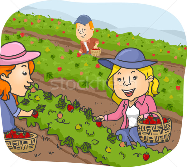 Stock photo: People Picking Strawberry Farm