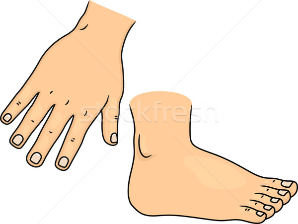 Hand and Foot Body Parts Stock photo © lenm
