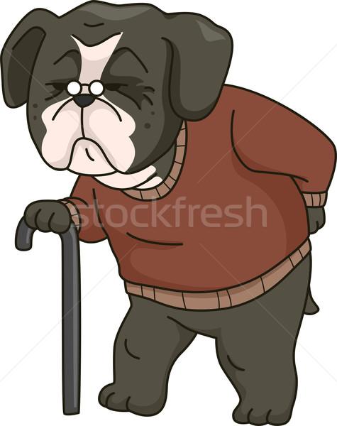 Old Dog Stock photo © lenm