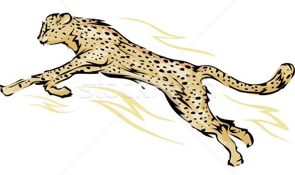 Guépard illustration sauter sport vitesse société Photo stock © lenm