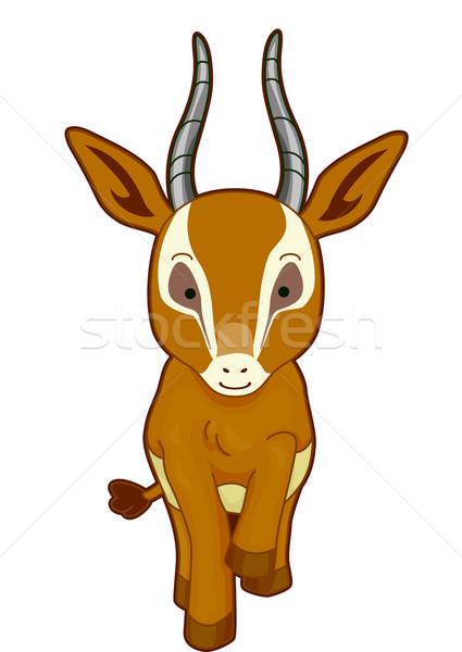 Gazelle Front Stock photo © lenm