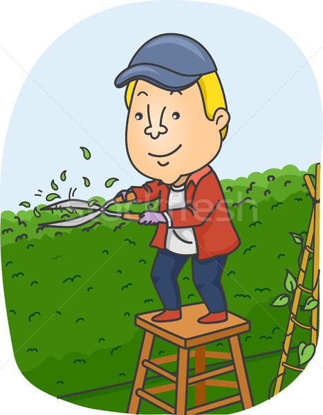 Man Trimming Garden Hedge Stock photo © lenm