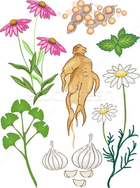 Common Herbal Medicines Stock photo © lenm