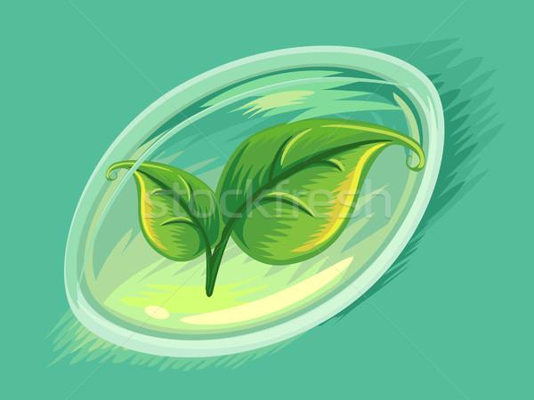 травяной мягкой гель капсула листьев иллюстрация Сток-фото © lenm
