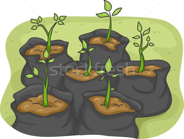 Saplings Stock photo © lenm