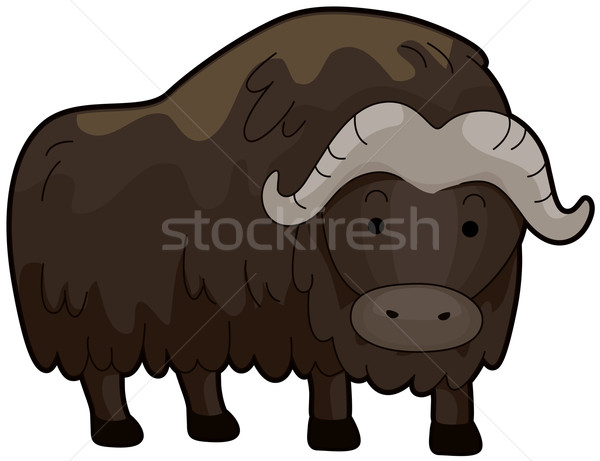 Musk Ox Stock photo © lenm