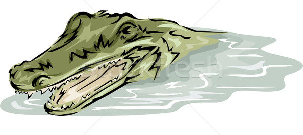 Crocodile Stock photo © lenm