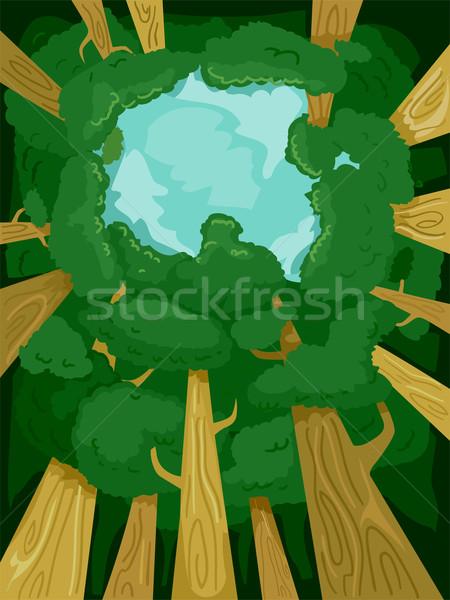 Tree Canopy Stock photo © lenm