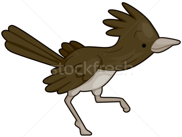 Bonitinho corrida direito pássaro isolado Foto stock © lenm