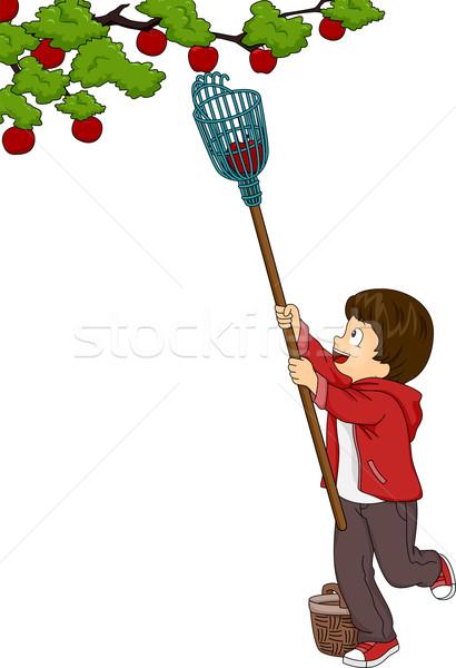Fruit Picking Boy Stock photo © lenm