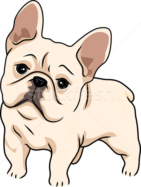 Frans bulldog illustratie cute nieuwsgierig hond Stockfoto © lenm