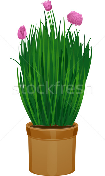 Potted Chives Stock photo © lenm