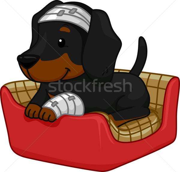 応急処置 犬 実例 かわいい ダックスフント デジタル ストックフォト © lenm