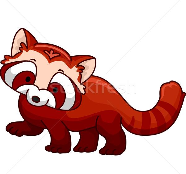 Red Panda Stock photo © lenm