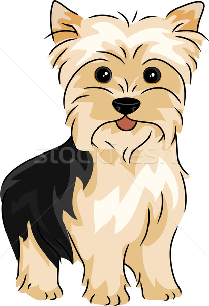 Foto stock: Yorkshire · terrier · ilustración · animales · Cartoon · aislado