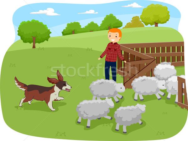 Shepherd Dog Stock photo © lenm
