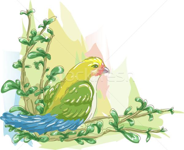Bird Sketch Stock photo © lenm
