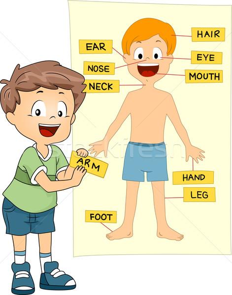 Alkatrészek test illusztráció gyerek diák tudomány Stock fotó © lenm