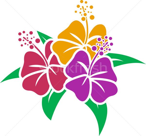 Hibiscus stencil illustratie bloemen ontwerp cartoon Stockfoto © lenm