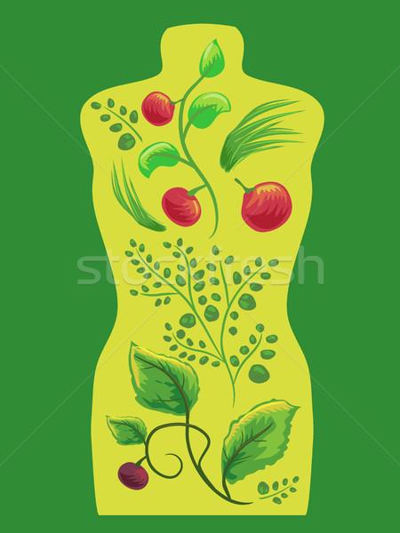 Herbs Representing Internal Organs Stock photo © lenm