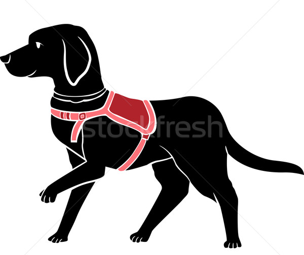 Guider chien illustration noir labrador Photo stock © lenm