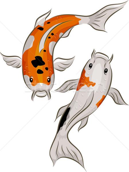 Koi vis illustratie paar kleurrijk zwemmen Stockfoto © lenm