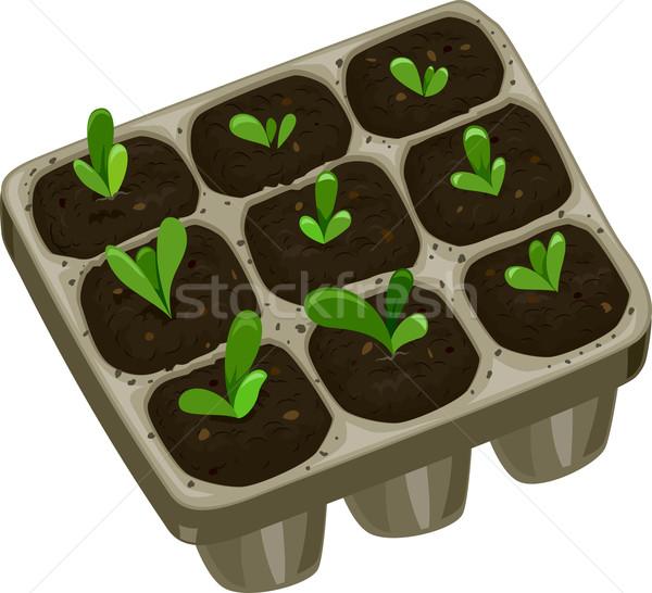 Palánta tálca illusztráció zöld rajz kertészkedés Stock fotó © lenm
