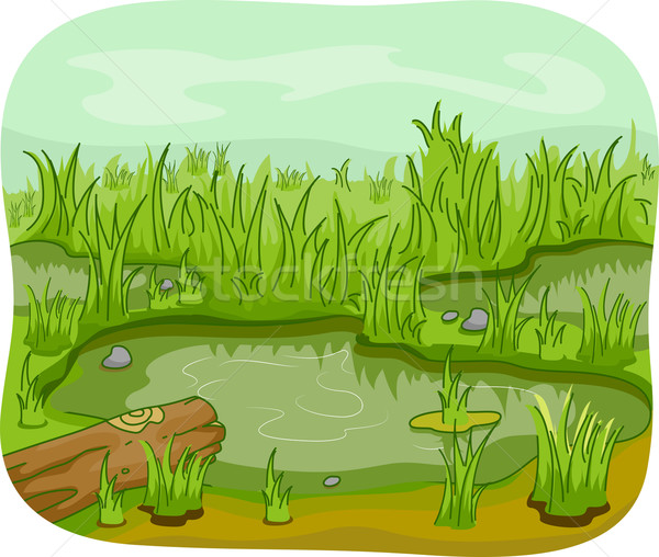 Wetlands Stock photo © lenm