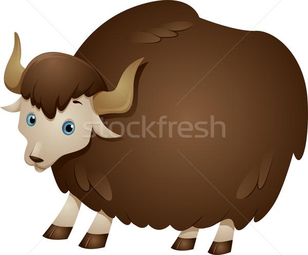 Brown Yak Stock photo © lenm