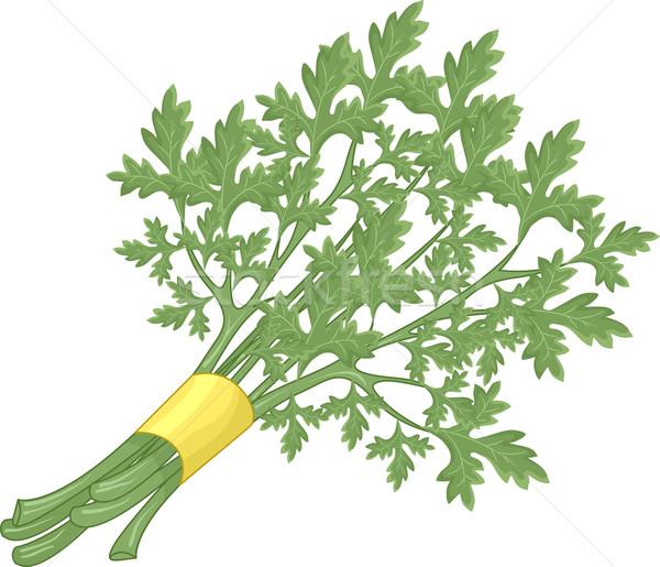 Peterselie illustratie bos voedsel natuur gezondheid Stockfoto © lenm