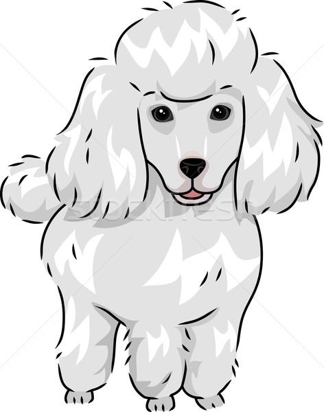 Barboncino illustrazione cute peloso cane vettore Foto d'archivio © lenm