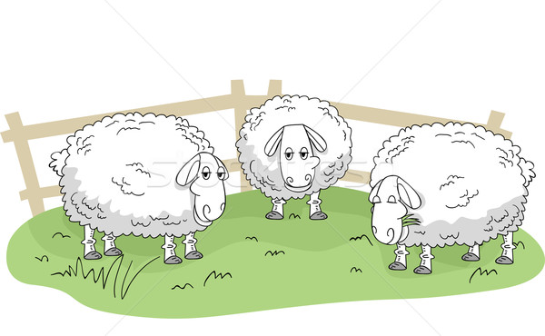 Sheep Stock photo © lenm