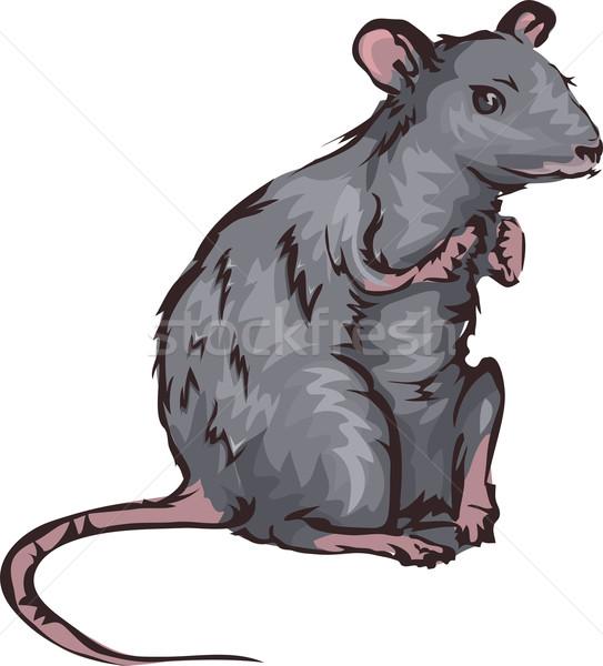 Rata ilustración ratón deportes empresa animales Foto stock © lenm