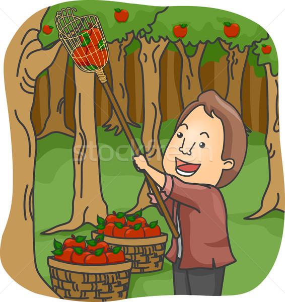 Man Fruit Picker Stock photo © lenm