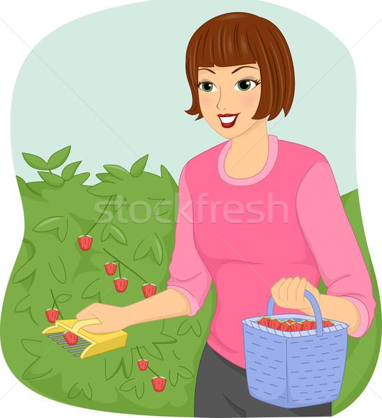 Girl Fruit Picker Stock photo © lenm
